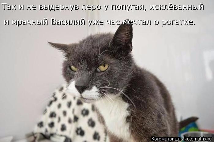 kotomatritsa_i (700x464, 200Kb)