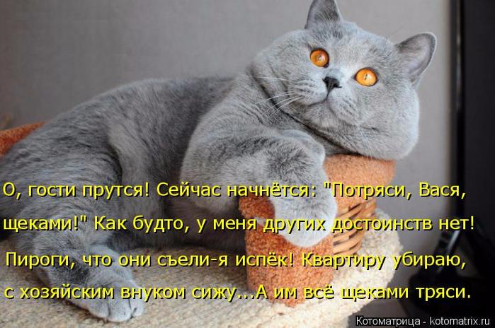 kotomatritsa_N4 (700x464, 354Kb)