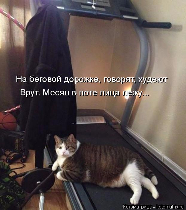 kotomatritsa_x (622x700, 231Kb)