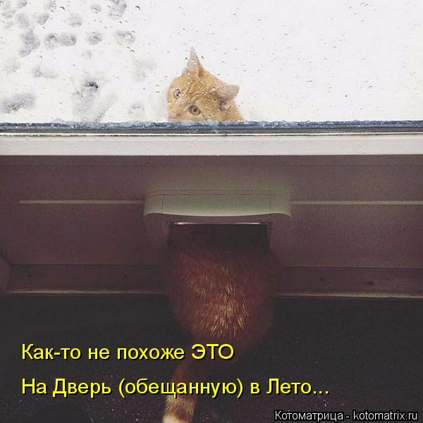 kotomatritsa_Y (600x600, 176Kb)