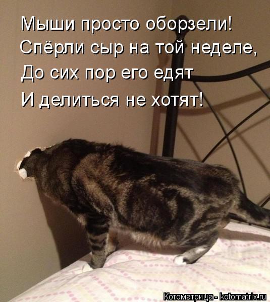 kotomatritsa_O7 (535x600, 206Kb)