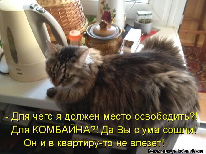 kotomatritsa__ (1) (700x524, 372Kb)