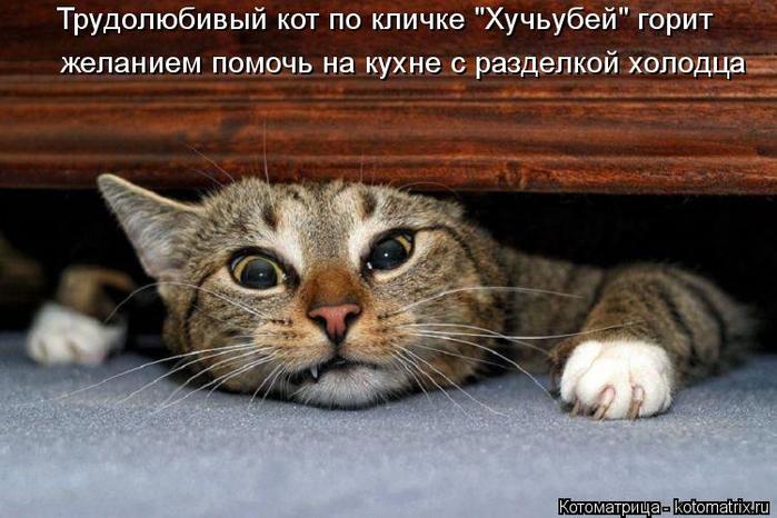 kotomatritsa_0 (700x466, 329Kb)
