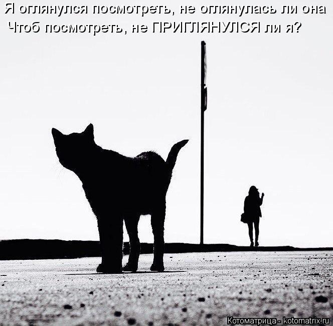 kotomatritsa_gy (664x651, 146Kb)