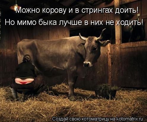 kotomatritsa_T (496x411, 171Kb)