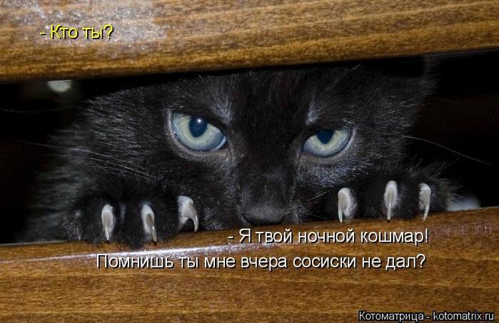 kotomatritsa_U (700x453, 306Kb)