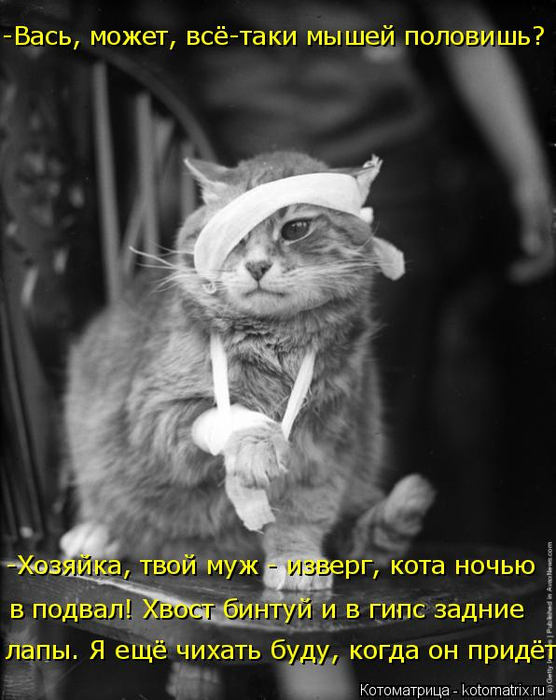 kotomatritsa_3 (556x700, 270Kb)
