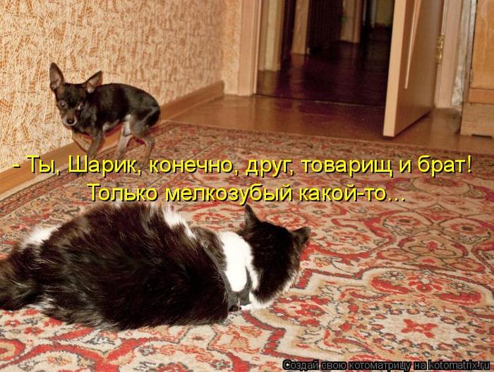 kotomatritsa_6 (700x527, 463Kb)