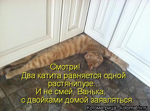 kotomatritsa_A (1) (500x373, 142Kb)