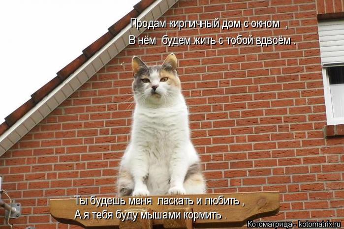 kotomatritsa_a1 (700x466, 377Kb)