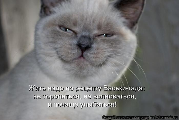 kotomatritsa_d (700x468, 183Kb)