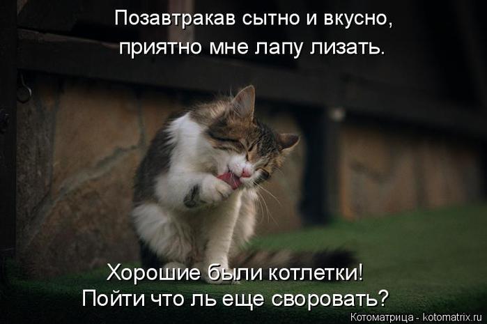 kotomatritsa_I (1) (700x465, 216Kb)