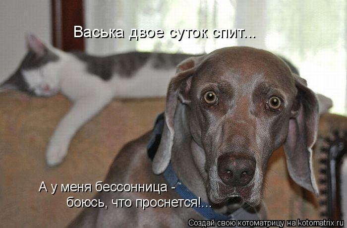 kotomatritsa_J (700x460, 180Kb)