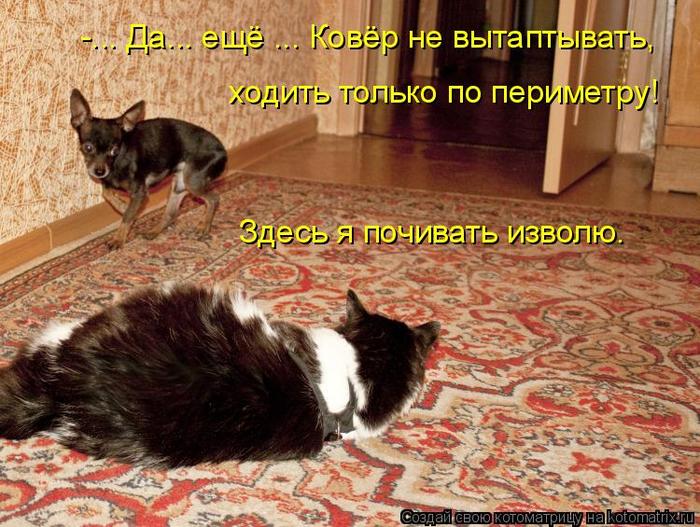 kotomatritsa_q (700x527, 481Kb)