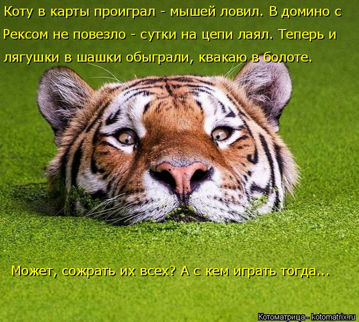 kotomatritsa_S (700x629, 577Kb)