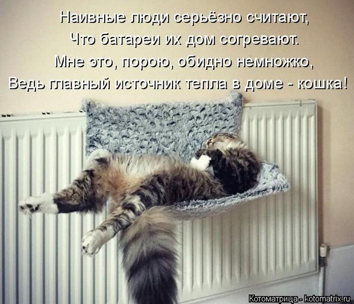 kotomatritsa_uF (700x601, 356Kb)