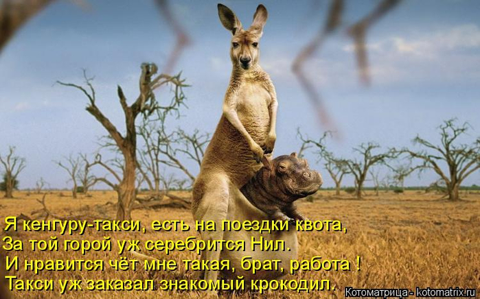 kotomatritsa_y (700x436, 355Kb)