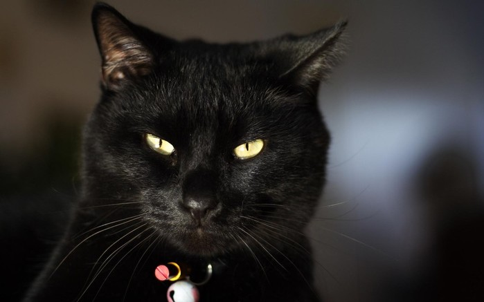 3314684-cat-eyes-face-dark-collar (700x437, 44Kb)