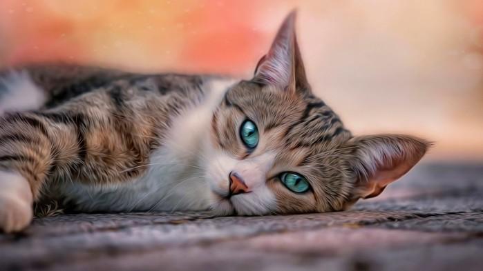blue-eyes-cat-yOn-1024x576-MM-90 (700x393, 52Kb)