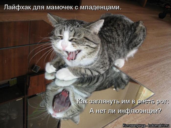 Котоматрица всегда поднимает настроение