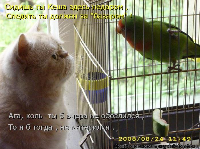 kotomatritsa_D8 (700x524, 416Kb)