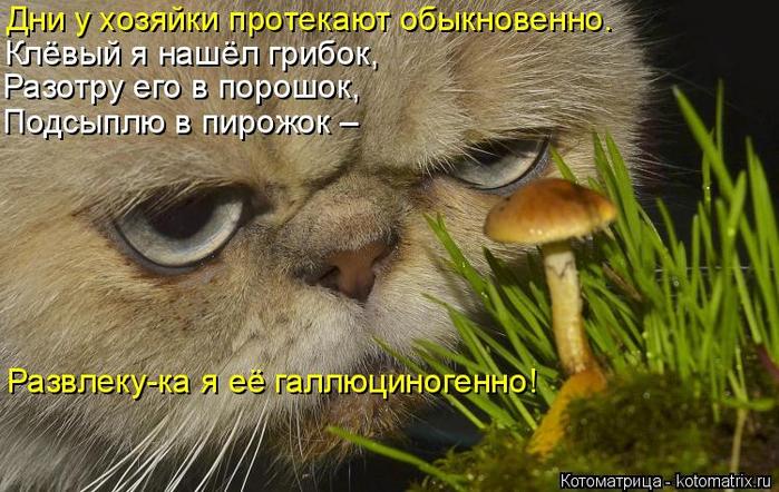 kotomatritsa_gn (700x442, 382Kb)
