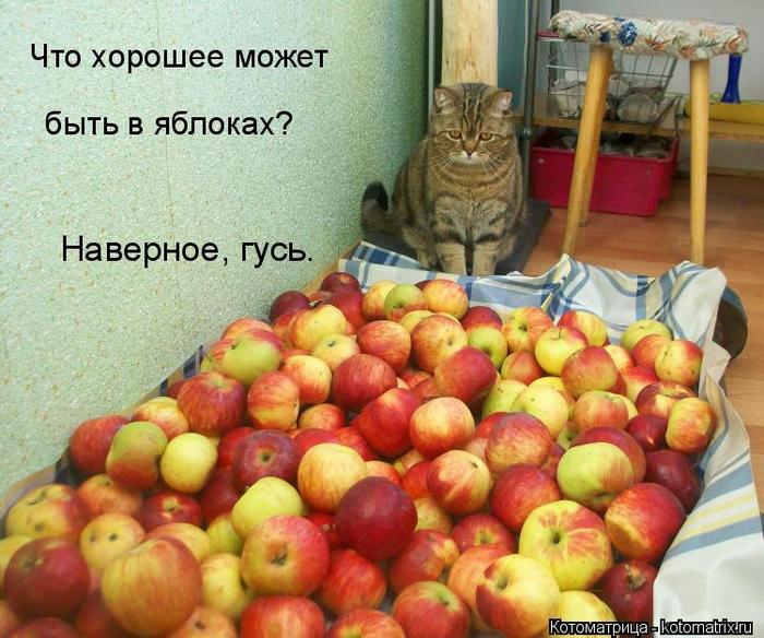 kotomatritsa_p (700x584, 468Kb)