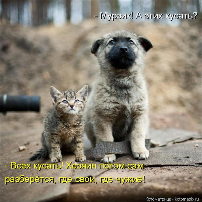 kotomatritsa_sw (700x700, 435Kb)