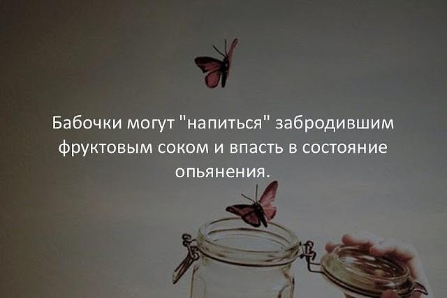 -vQzZ1qRC0w (640x427, 122Kb)