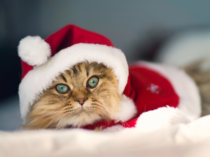 the-kitty-also-love-christmas-1080P-wallpaper (700x525, 79Kb)