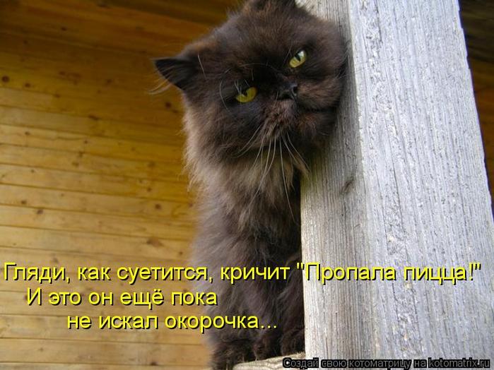 kotomatritsa_A (700x524, 372Kb)