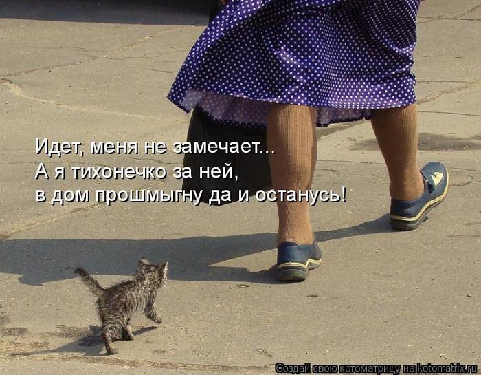kotomatritsa_D8 (700x545, 383Kb)