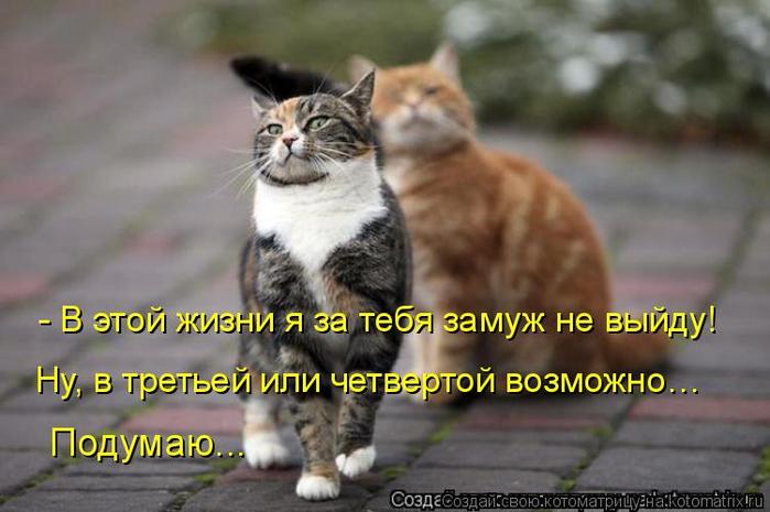 kotomatritsa_m (1) (700x465, 276Kb)