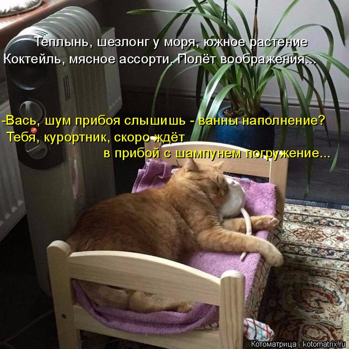 kotomatritsa_T (700x700, 490Kb)