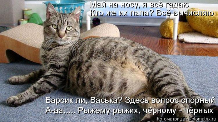 kotomatritsa_rU (700x392, 323Kb)