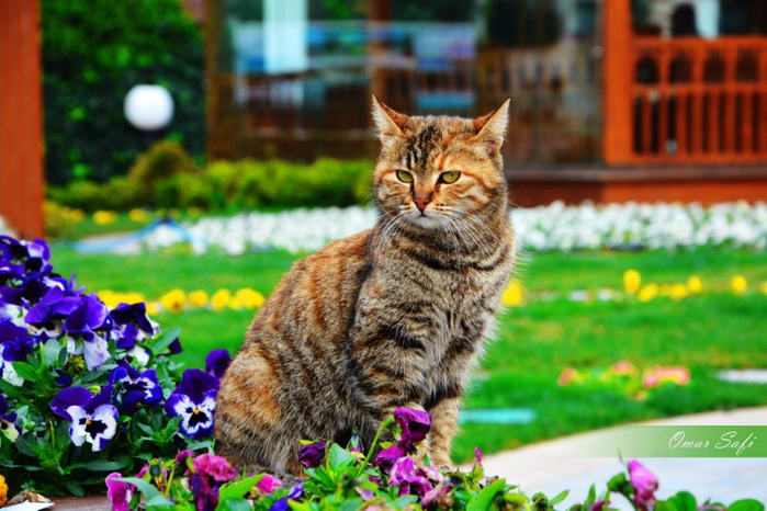 Cats_Sniffing_Flowers_23 (700x466, 392Kb)