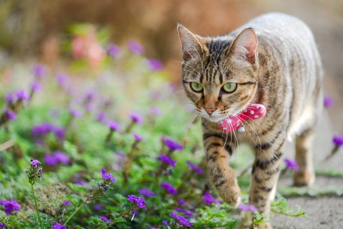 Cats_Sniffing_Flowers_18 (700x467, 323Kb)