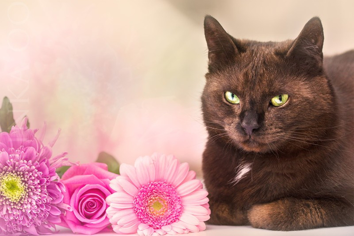 Cats_Sniffing_Flowers_09 (700x467, 288Kb)