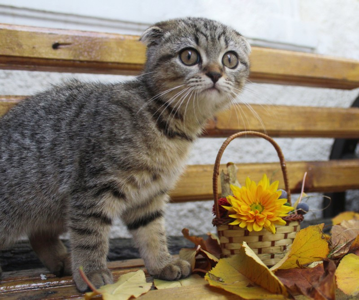 Cats_Sniffing_Flowers_08 (700x585, 408Kb)