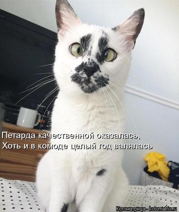 kotomatritsa_Ex (593x700, 307Kb)