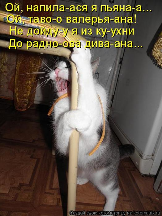 kotomatritsa_k8 (524x700, 347Kb)