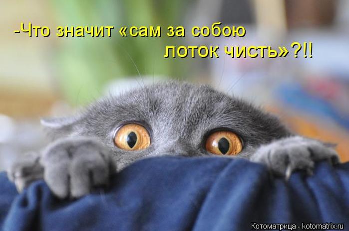 kotomatritsa_nd (700x464, 261Kb)