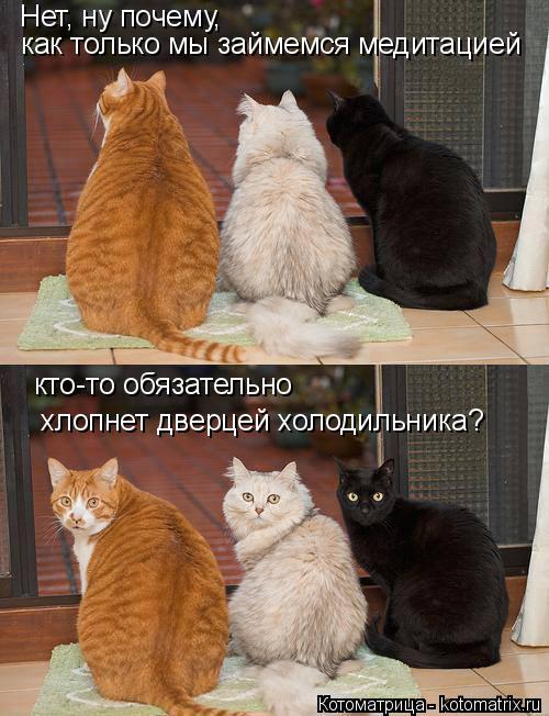 kotomatritsa_RF (500x652, 236Kb)