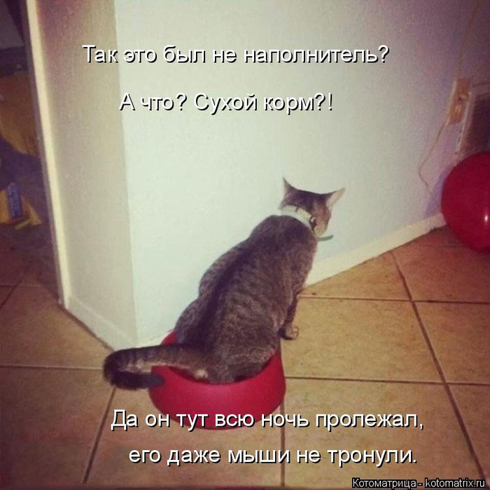 kotomatritsa_T (700x700, 365Kb)