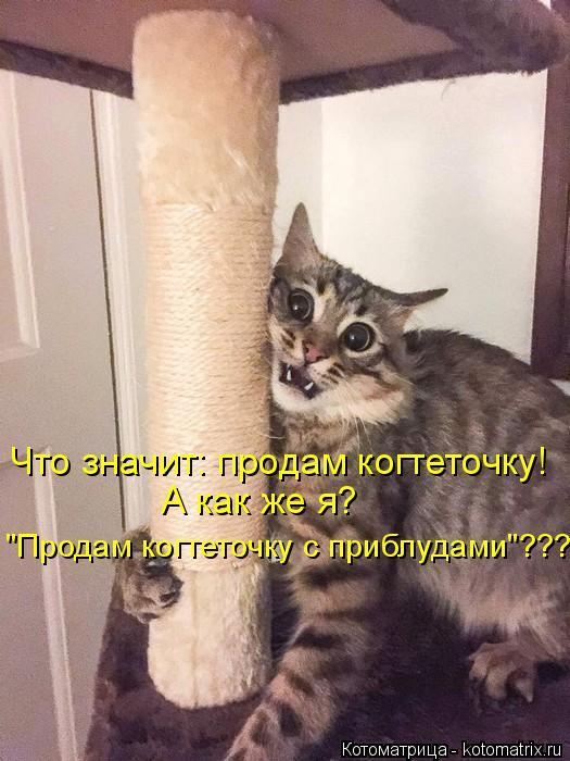 kotomatritsa_x (525x700, 225Kb)