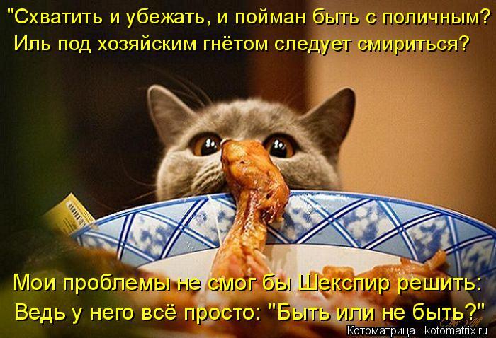 kotomatritsa_2 (700x478, 338Kb)