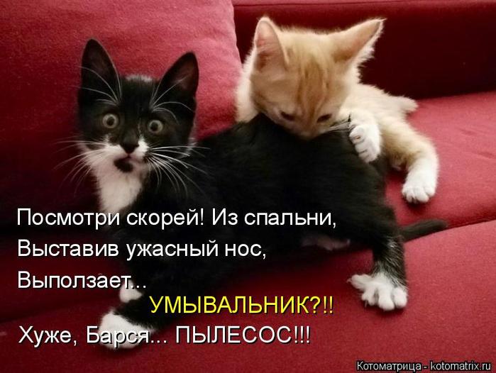 kotomatritsa_G (700x526, 317Kb)