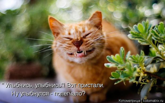 kotomatritsa_JK (700x436, 298Kb)