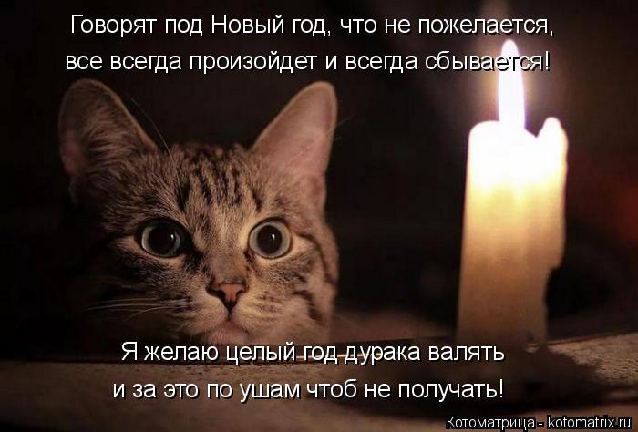 kotomatritsa_q (700x474, 185Kb)