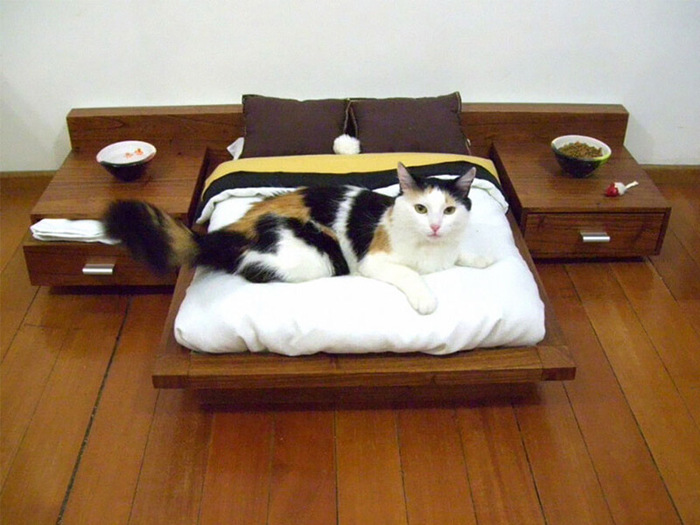 top-10-best-cat-beds-for-kittens-reviews (700x525, 118Kb)